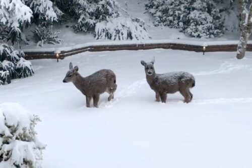 纳奈莫气候 - 2020-2021纳奈莫天气情况,纳奈莫气候-冬天会下雪吗?
