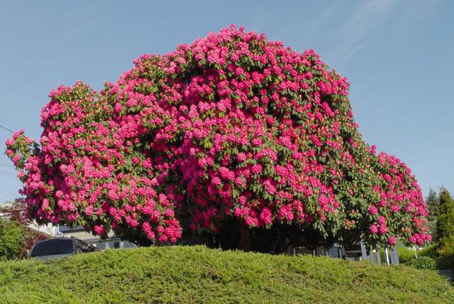 温哥华岛 - 温哥华岛春夏之季最值得去的地方